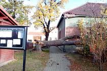 Silný vítr, který místy ve čtvrtek 21. října 2021 v České republice překročil i rychlost 100 km/h, vyvrátil lípu u hospody v Jamném, jež patří pod Boršov nad Vltavou.