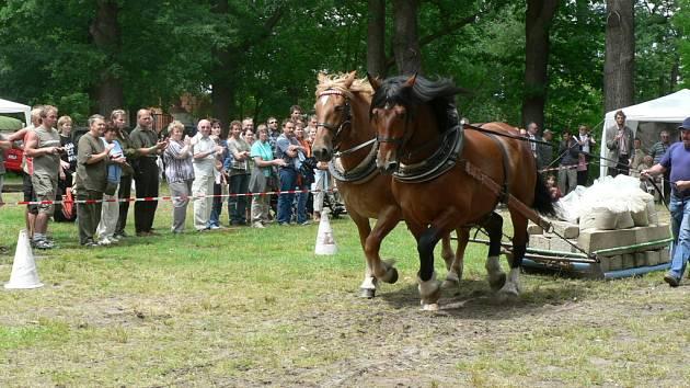 Na louce před zámkem Ohrada se v sobotu v rámci mysliveckých slavností utkali tažní koně z celé republiky.