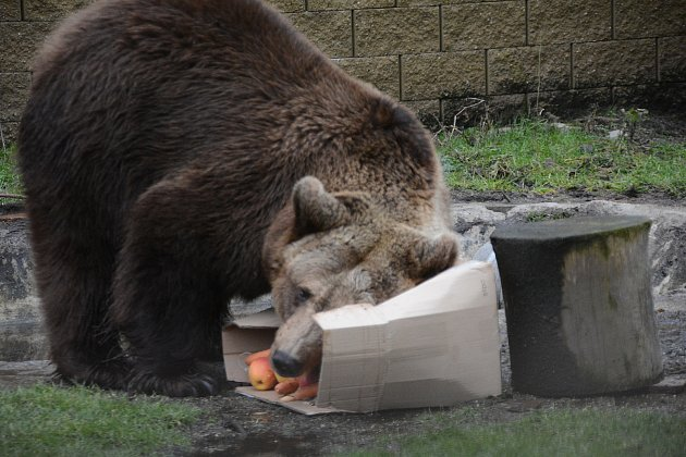 Medvědice Airina je vnejlepších letech.