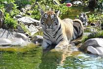 Některá zvířata hlubocké zoo si užívají v těchto dnech příjemné osvěžení.