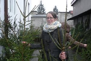 V prodejně Lesů a rybníků města Českých Budějovic nachystali pro zákazníky na sedm set stromků.