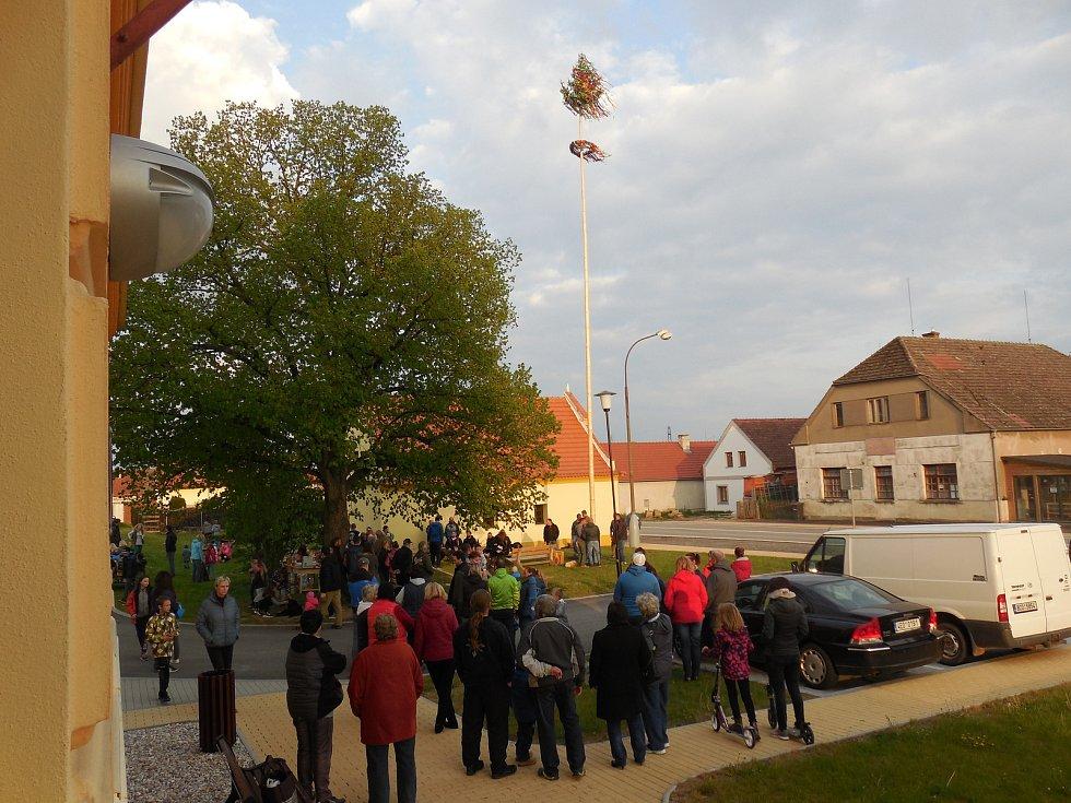 Stavění májky v obci Vitín.