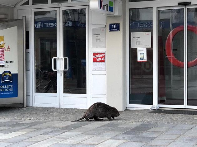 Jak šel bobr do banky…