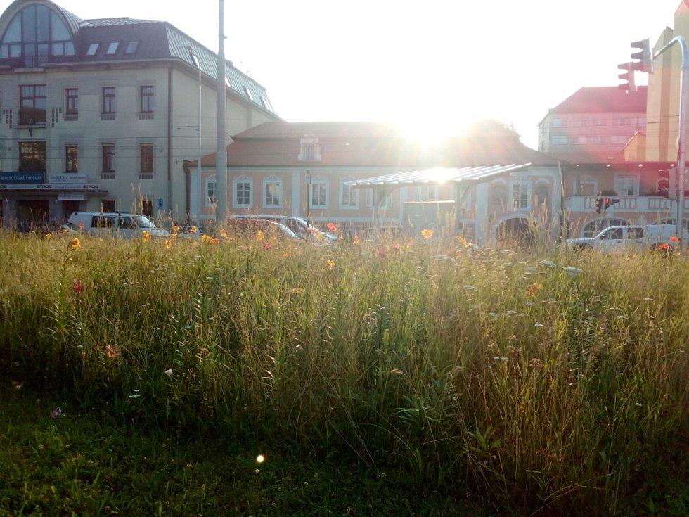 Sochy v Českých Budějovicích krášlí i záhony v blízkém okolí. Výzdobu radnice průběžně vylepšuje. Chystá například i noční nasvícení soch Vltavy a Malše u Dlouhého mostu.