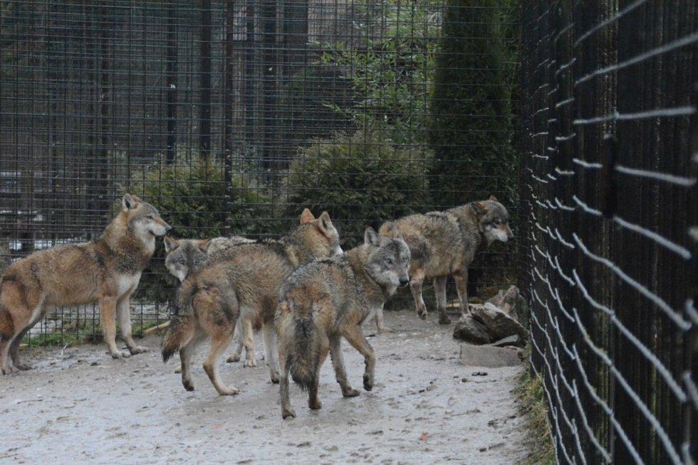 Zvířata v Zoo Dvorec u Borovan vichřice netrápila.