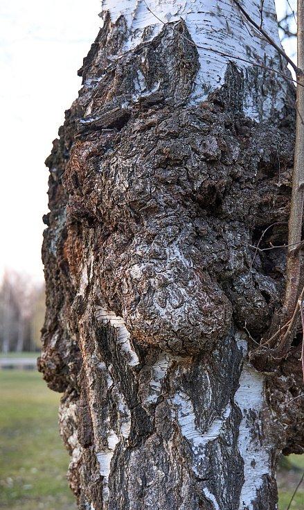 Duch stromový 18 - nosáč
