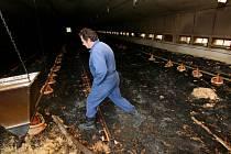 Při středečním požáru drůbežárny v Hvozdně u Týna nad Vltavou uhořelo nebo se udusilo 33 tisíc kuřat.
