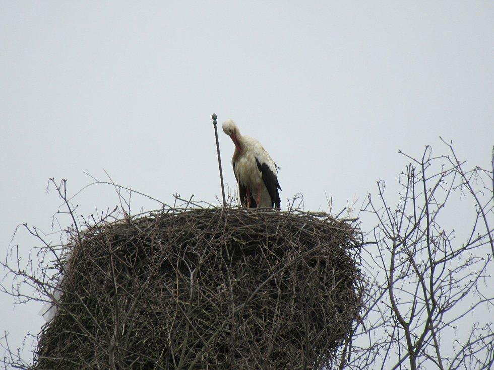 Čapí pár už se vrátil také na své hnízdiště v Hluboké nad Vltavou.