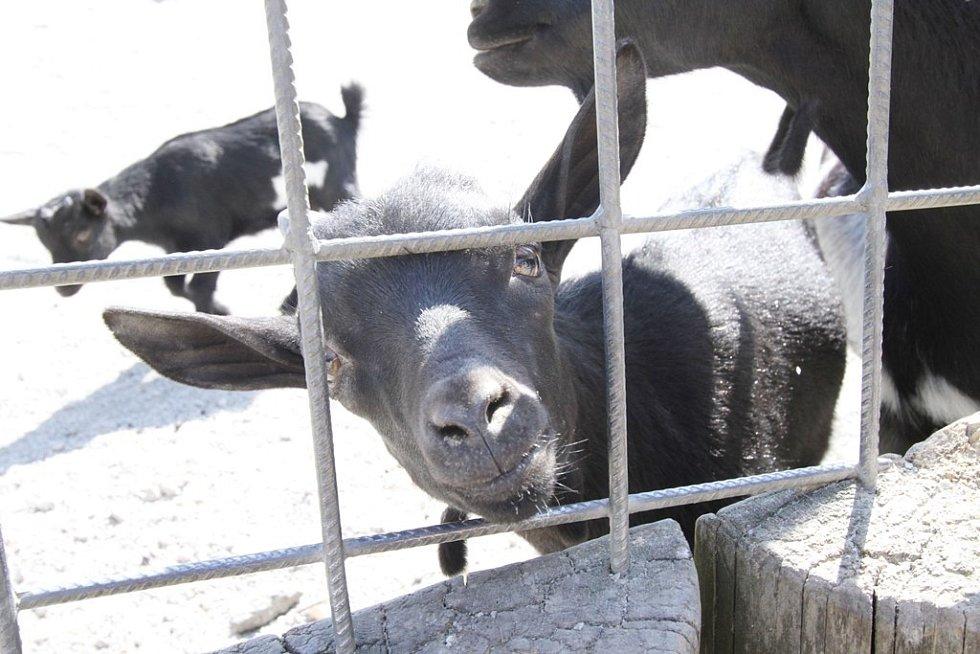 Zvířata v hlubocké zoo.