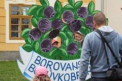 Borůvkobraní v Borovanech.