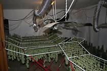 Jako v prádelně si připadali policisté v místech sušení dozrálých rostlin. Hlavní sklizeň a transport měly teprve přijít.