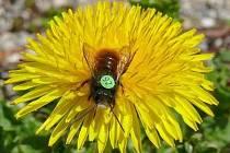 Přilepené číslo hmyzu nevadí.