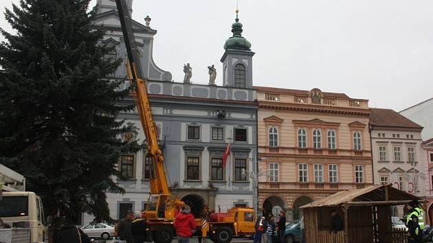 Vanoční strom na náměstí Přemysla Otakara II. dorazil z Nedabyle