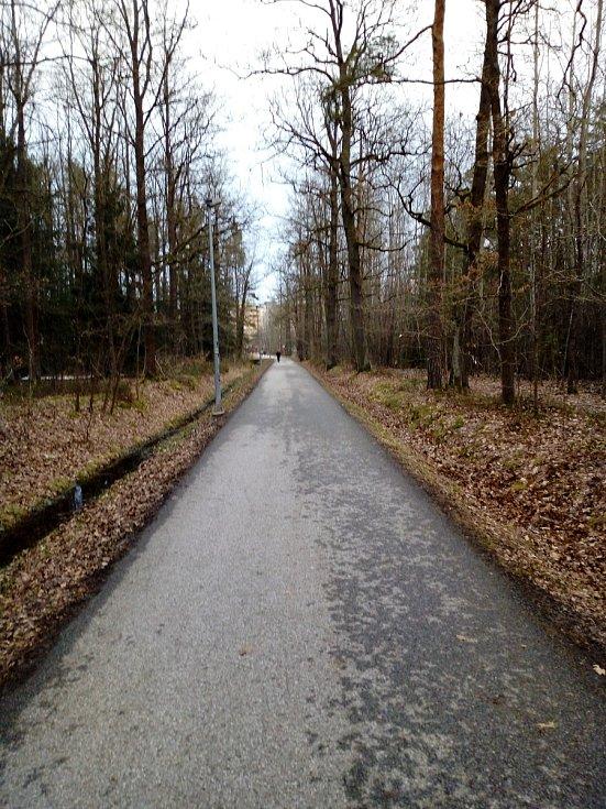 Ponurá procházka Branišovským lesem