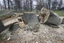 Jen torza zbyla po mohutných topolech a jednom javoru u Malého jezu v krajském městě. Magistrát tvrdí, že stromy byly podle posudku z dubna v havarijním stavu.