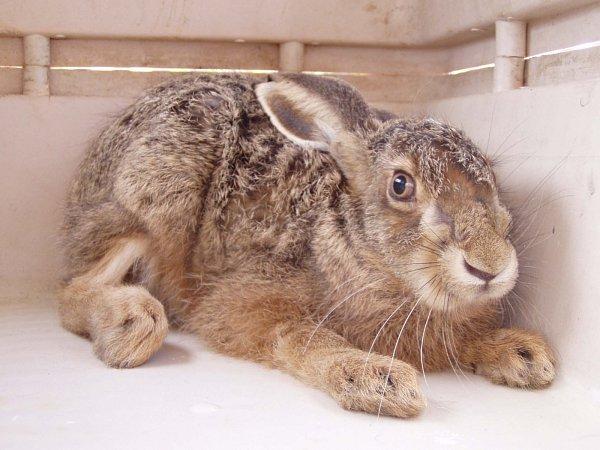 Chudák zajíc… Tenhle ale přežil.