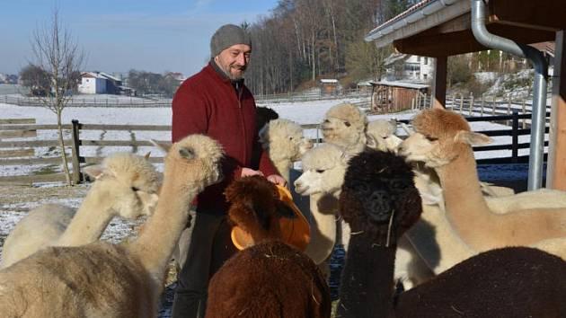 Nechají se i drbat jako ovce...