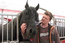 Unikátní v České republice je drezúra fríských koní. Šest hřebců dovezli majitelé cirkusu z holandského Fríska ve věku jednoho roku.