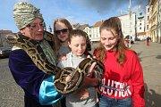 Had na českobudějovickém náměstí