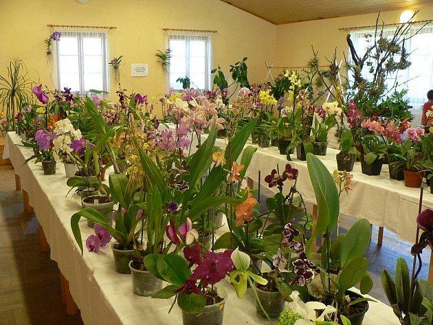 Výstava orchidejí v Homolích nabízí nejen pohled na květiny, ale ukazuje zblízka i jiné obyvatele tropů.