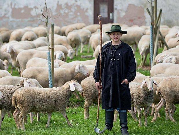 Mladý ovčák, vzácnost…