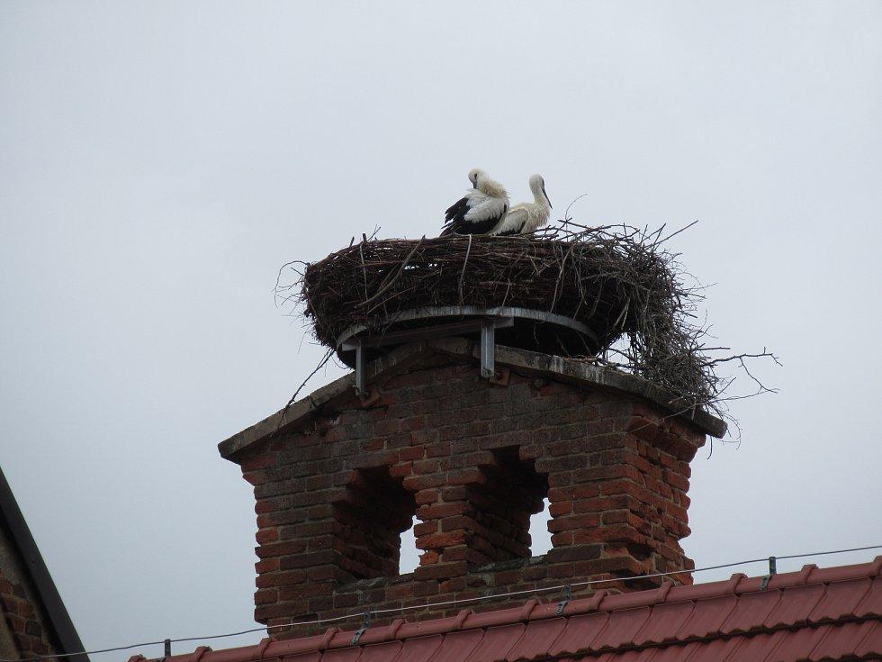 Čápi na novém umělém hnízdě v Chýnově. Ilustrační foto.