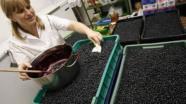 V Borovanech na Českobudějovicku vrcholí přípravy na víkendové Borůvkobraní. V místní mateřské škole právě vaří borůvkovou marmeládu. Tři kuchařky (na snímku Pavla Čadová) zde musí zpracovat na 200 kilogramů borůvek.