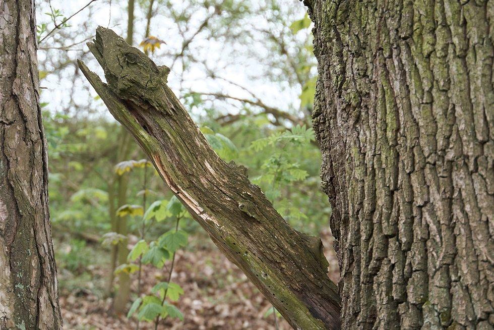 Duch stromový 27 - predátor