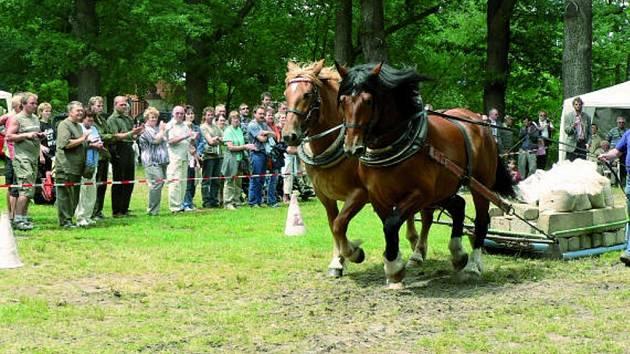 Oblíbenou atrakcí Národních mysliveckých slavností jsou závody koňských spřežení.