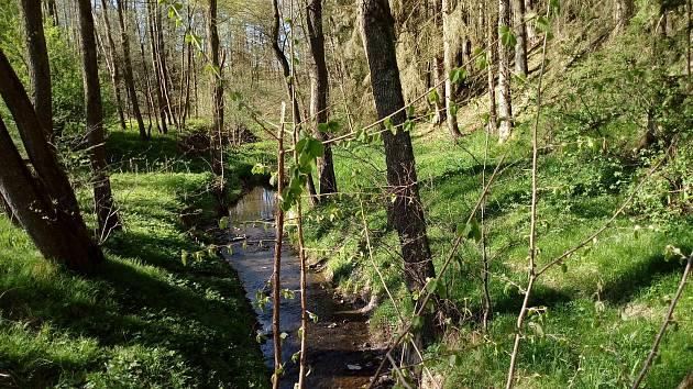 Květnová procházka Mojským lesem a lesy kolem Borku.