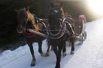 Turisté se můžou svézt na Šumavě také koňským spřežením.