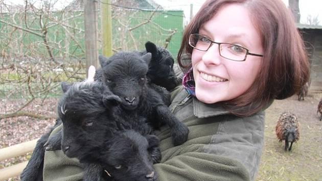 Přírůstky v Zoo Ohrada. Ovce ouessantská.