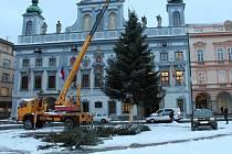 Nejkrásnější strom v republice se 14. ledna rozloučil.