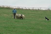Novohradský pohár. Soutěž pasteveckých psů se pomalu v Dolní Stropnici na farmě Jana Vejčíka stává tradicí.