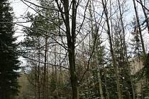Petr Kocina a buk lesní.
