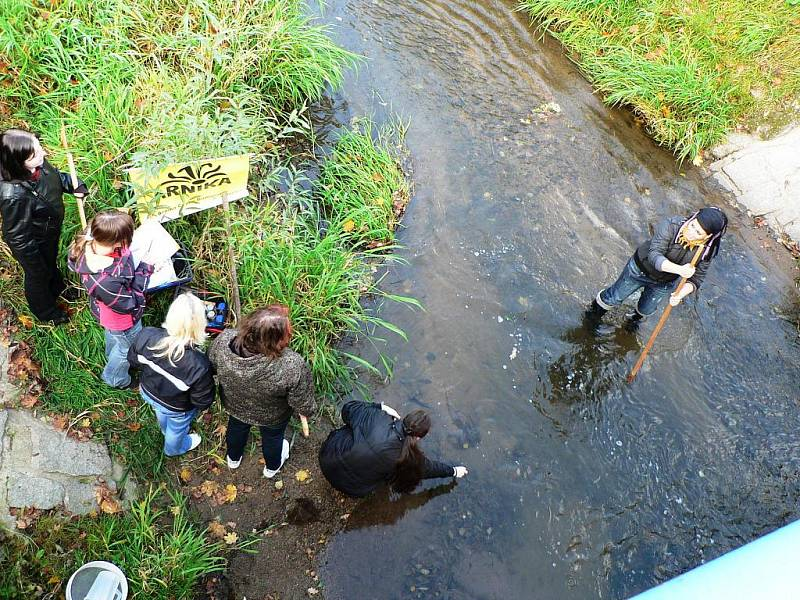 U potoka Kyselá voda u Hrdějovic bylo v úterý nezvykle živo. Tým ze střední školy v Kněžskodvorské ulici v Českých Budějovicích odebíral vzorky bahna a lovil vodní havěť.
