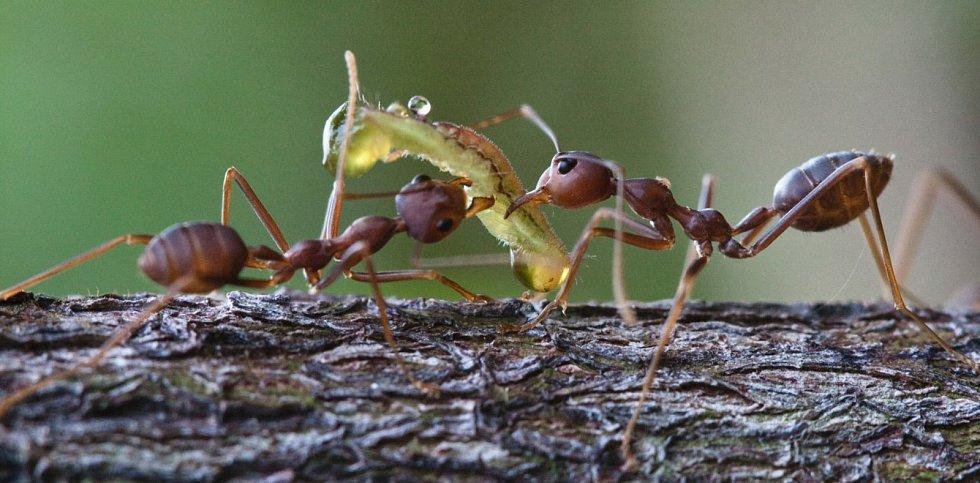 Rozsáhlý srovnávací výzkum hmyzu na třech kontinentech provedli také vědci z českobudějovického Biologického centra Akademie věd ČR.