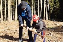 Obnova lesa u Ševětína