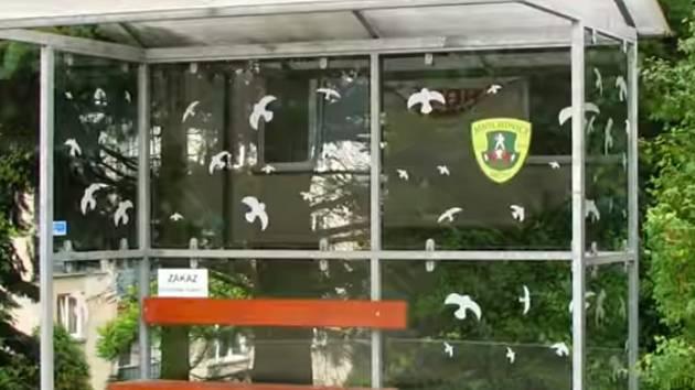Jak ochránit ptáky, aby nenaráželi do skel.