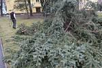 Extrémně silný vítr v Českých Budějovicích na Pražském předměstí vyvrátil stromy.