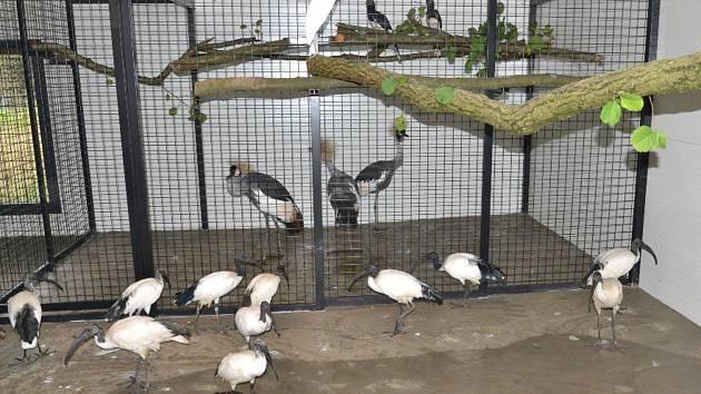 Noví obyvatelé ptačího zimoviště jsou od chovatelů českých a německých. Prasata savanová nejsou k mání.