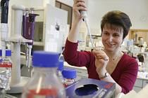 Alena Krejčí zkoumá, jak mezi sebou komunikují jednotlivé buňky. Nyní ji zajímají hlavně ty rakovinové.