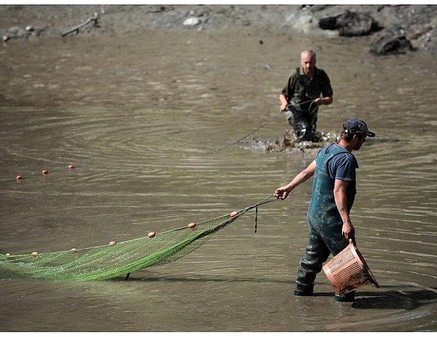 Vtomto rybníce hledají nebezpečnou želvu.