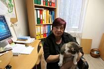 V Hradcích na Českobudějovicku nejsou mimořádné volby do zastupitelstva ničím mimořádným. Konaly se tu v sobotu 4. listopadu a téměř přesně na den před rokem 5. 11. 2016 také.