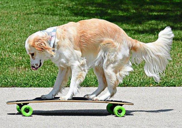 Nana na skateboardu.