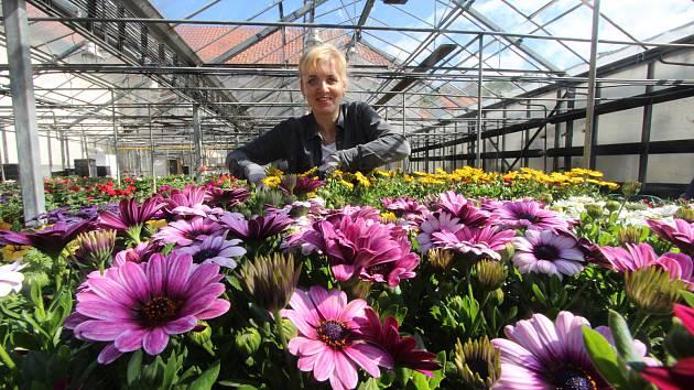 Sto padesát tisíc balkonových květin ze zahradnictví v Hluboké nad Vltavou,blondýna Květa Sedláčková,tmavovlasá Blanka Sedláková a s vodou Marcela Buchtelová