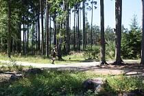 Branišovský les na okraji Budějovic zvaný Bor je místo opředené mnoha tajuplnými příběhy. Ale podle lékařů také místo, které léčí.