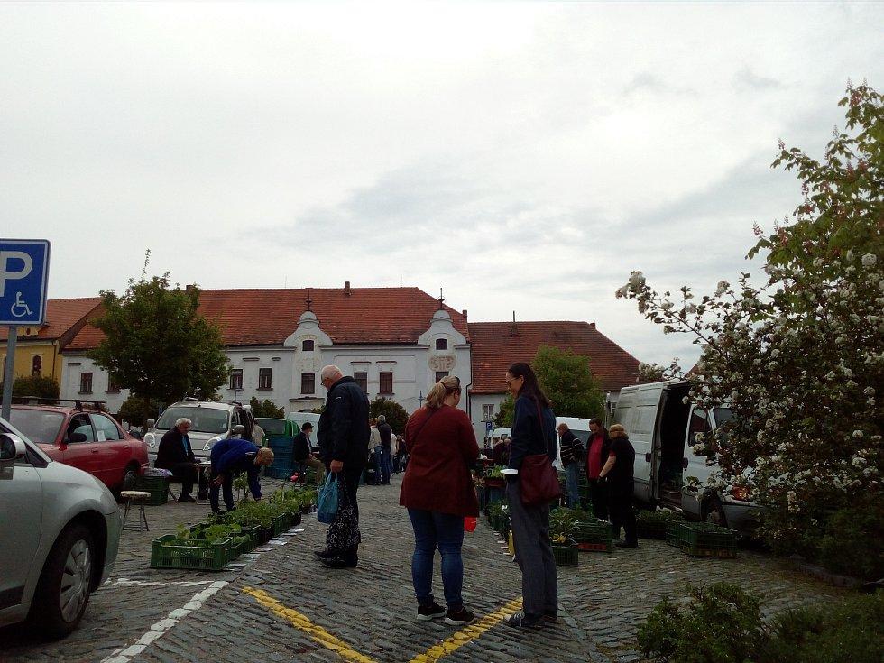 Také v Týně nad Vltavou obnovili oblíbené trhy na náměstí u kostela sv. Jakuba. Prim hrály 15. května 2021 sazenice.