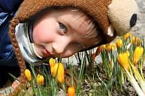 První květy slibují, že už brzy přijde jaro