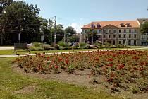 České Budějovice i v roce 2020 pořádají soutěž Rozkvetlé město.